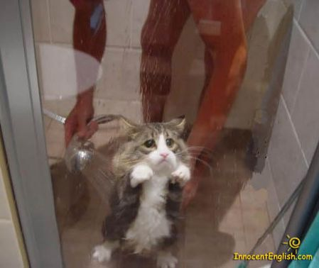 cute-sad-kitten-shower-pic114.jpg
