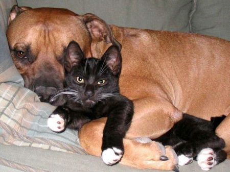 pictures of dogs and cats together