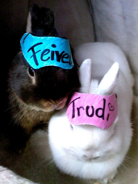 Trudi and Feivel