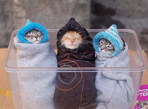 Cats in a blankie