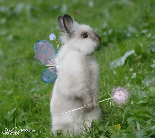 cute pictures of bunnies. Bunny Fairy