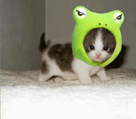 cute kitty frog